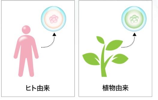 人には人の幹細胞
