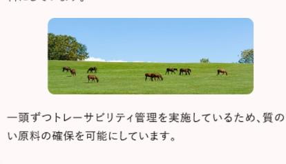 北海道産サラブレット